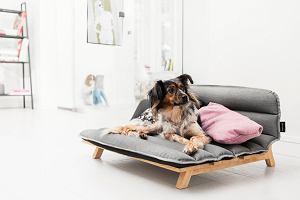 Ładne i wygodne legowisko dla psa - przegląd modeli. Gdzie postawić legowisko?