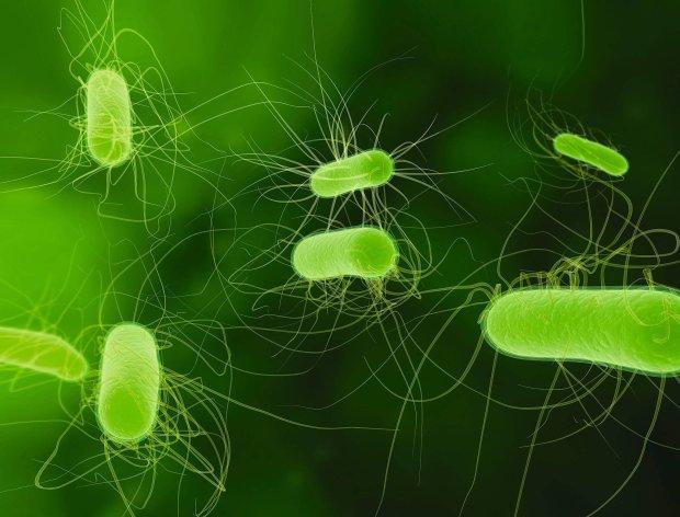 Jak działają antybiotyki