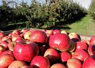 Rosja grozi Polsce embargiem na owoce i warzywa