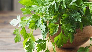Natka pietruszki, część naziemna rośliny z rodziny selerowatych, od wieków jest doceniana ze względu na walory smakowe i właściwości odżywcze.