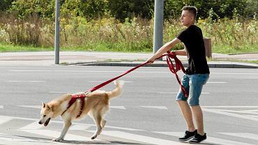 Akcja wyprowadzania psów ze schroniska przez osoby z zewnątrz