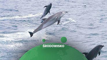 Naukowcy odkryli, że delfiny zwracają się do siebie za pomocą sygnatur dźwiękowych