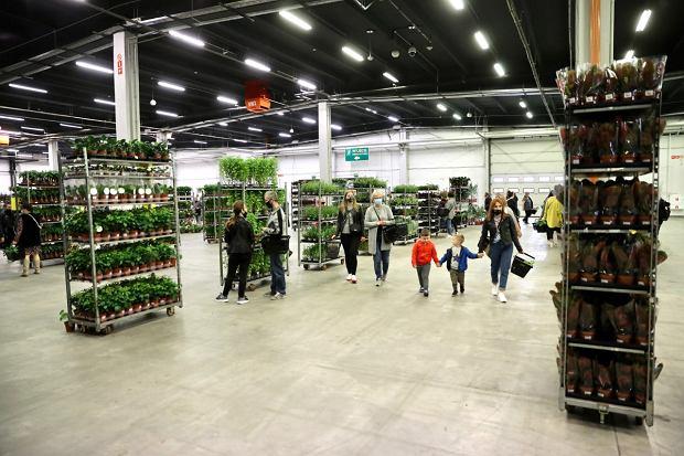 Zdjęcie numer 13 w galerii - Zazieleniły się targi w ten weekend. Trwa Festiwal Roślin i ich wyprzedaż. Zobacz, co można tam kupić  [ZDJĘCIA]