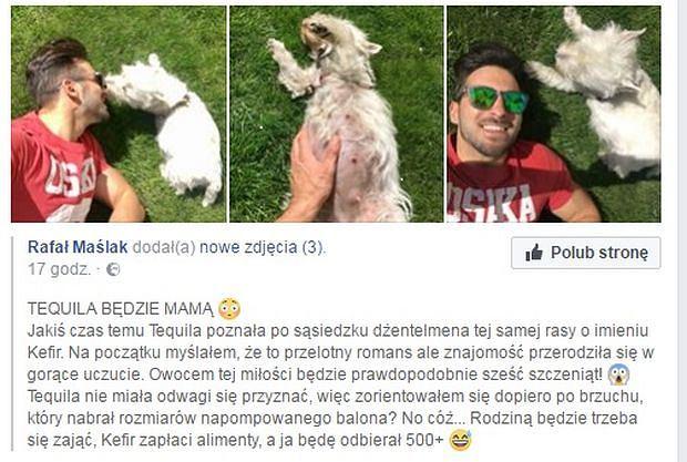 Rafał Maślak o ciąży Tequili