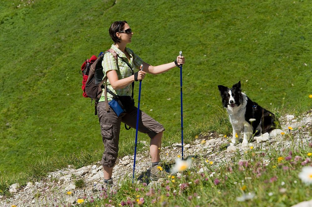 Dogtrekking, czyli trekking z psem