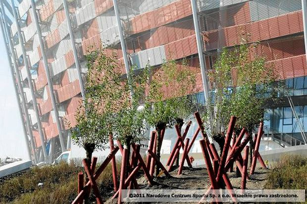 Sadzą drzewa przy Stadionie Narodowym. Tłuczeń później