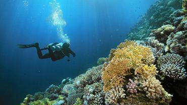 Nurkowanie w Morzu Czerwonym, Dahab