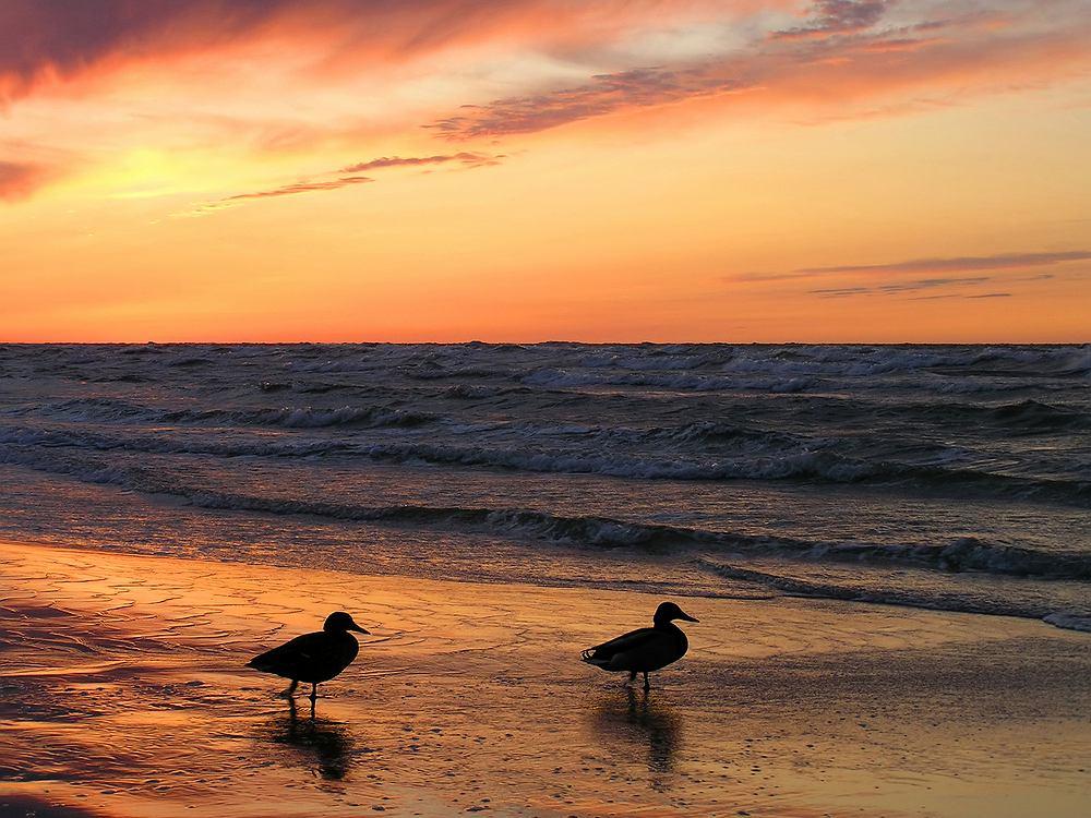 Łeba, plaża, polska