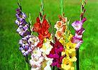 Kwiecień - przesadzamy byliny, sadzimy krzewy