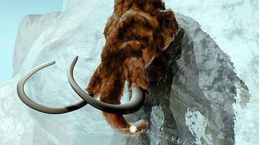 Trójwymiarowa rekonstrukcja wyglądu mamuta