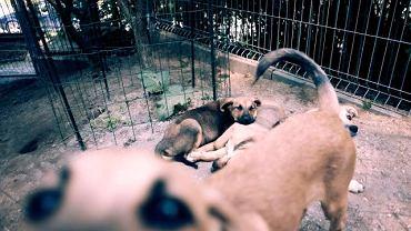 Bezdomne zwierzęta czekają na pomoc