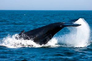 Nagoja chroni zagrożone gatunki