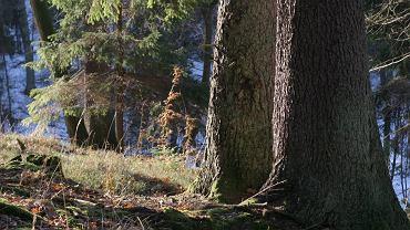 Rezerwat Las Warmiński koło Olsztyna