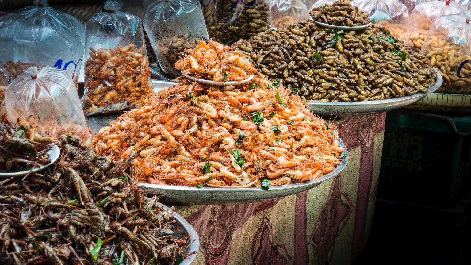 Stoisko handlowe z mrożonymi owadami