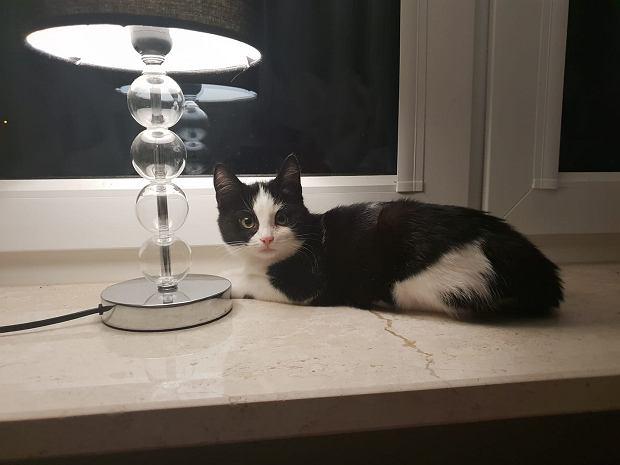 Zdjęcie numer 94 w galerii - Karmel, Daktyl, Kapitan Benny, Ptyś, Wiesław... Kochane i piękne - oto Wasze koty [GALERIA NA DZIEŃ KOTA]