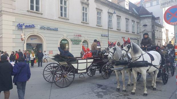 Polski kibice w dorożce na Stephanplatz w Wiedniu