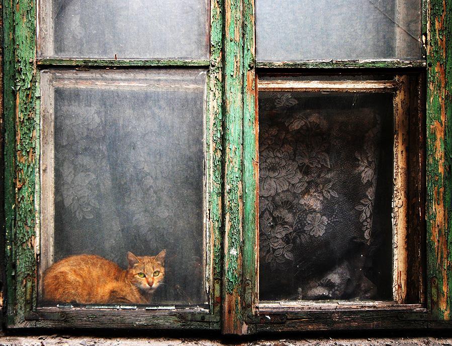'Kocie podwórko 2'. Fotografia autorstwa Joanny Sidorowicz