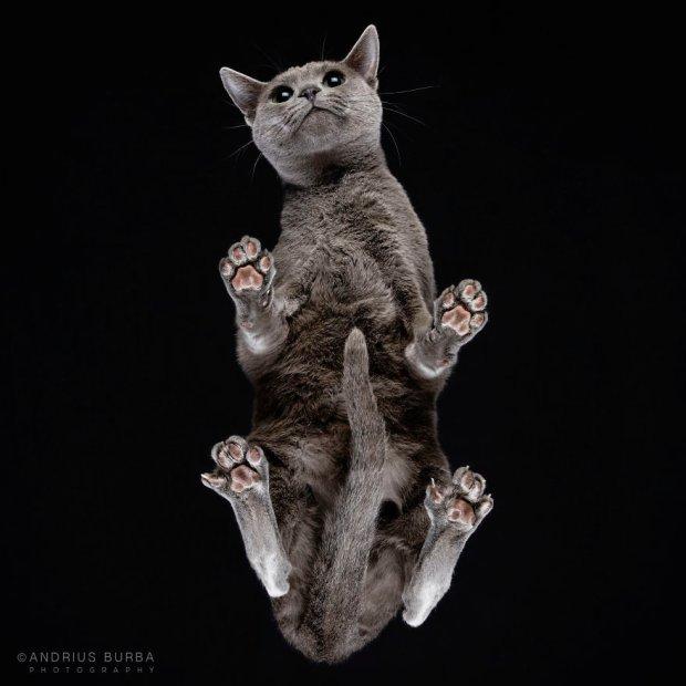 Kocie łapy w obiektywie. Takich zdjęć kotów jeszcze nie widzieliście