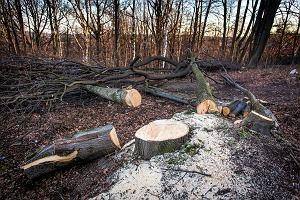 Dokąd jedzie drewno z polskich lasów?