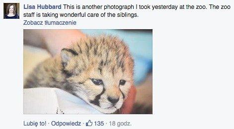 Komentarz na Facebooku