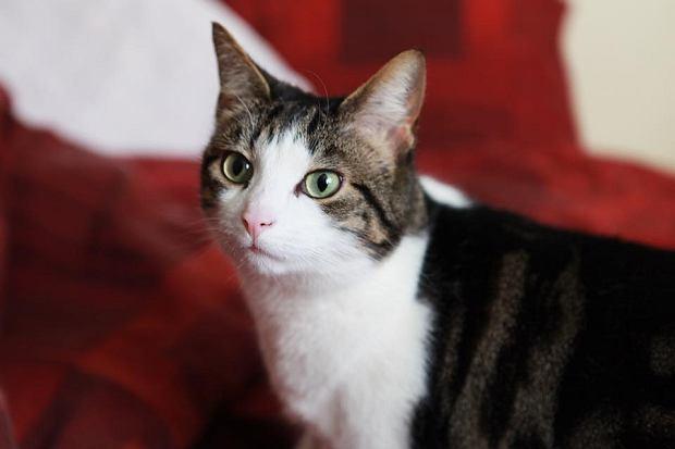 Zdjęcie numer 93 w galerii - Karmel, Daktyl, Kapitan Benny, Ptyś, Wiesław... Kochane i piękne - oto Wasze koty [GALERIA NA DZIEŃ KOTA]