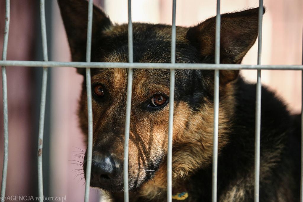 Radny PiS z Inowrocławia przeciwny 'adopcji' zwierząt. 'Z szacunkiem do Stwórcy, najpierw człowiek, potem zwierzęta'