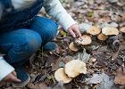 Objawy zatrucia grzybami - co powinno nas zaniepokoić? Czy małe dzieci mogą jeść grzyby?