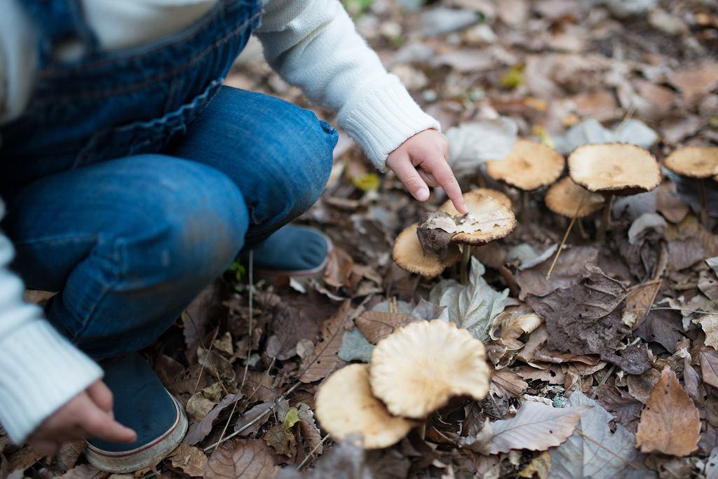 Objawy zatrucia grzybami - co powinno nas zaniepokoić?