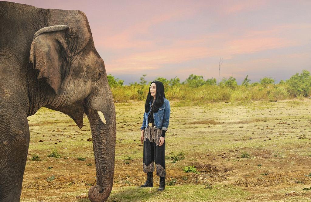Cher i najsamotniejszy słoń na świecie