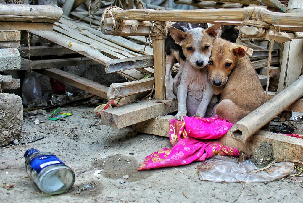 bezdomne szczeniaki (zdj. ilustracyjne)