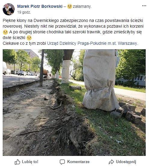 Uszkodzili korzenie klonów podczas budowy ścieżki rowerowej
