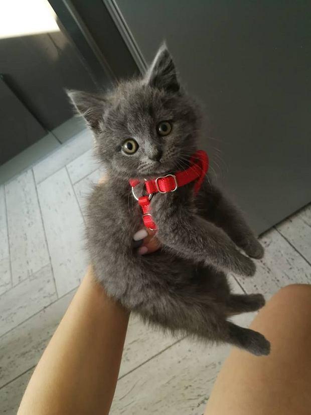 Zdjęcie numer 92 w galerii - Karmel, Daktyl, Kapitan Benny, Ptyś, Wiesław... Kochane i piękne - oto Wasze koty [GALERIA NA DZIEŃ KOTA]