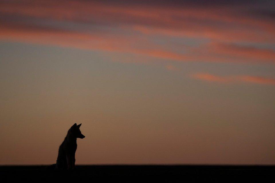 Zdjęcie numer 0 w galerii - Kojoty, kraksy i piękne widoki, wyjątkowe zdjęcia z Rajdu Dakar [GALERIA]