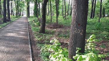 Park Strzygowskiego