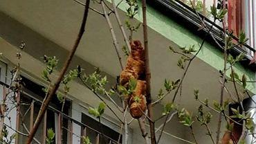 Croissant 'Lagun' przeraził mieszkańców Krakowa. Obrońcy zwierząt przygotowują gadżety