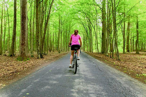 Trasa rowerowa w Białowieży