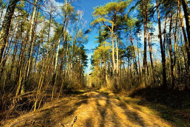 W Kampinoskim Parku Narodowym gniazdują m.in. bociany czarne, żurawie, orliki krzykliwe oraz bieliki. Symbolem parku jest zamieszkujący go łoś, aspotkamy tu także dziki, sarny, bobry, wydry, kuny, lisy, jenoty orazrysie. Od 2000 roku Kampinoski Park Narodowy uznawany jest przez UNESCO za Światowy Rezerwat Biosfery