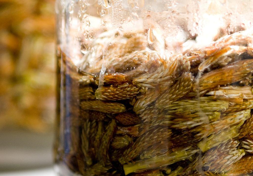 Jak zrobić domowy syrop na kaszel? Mamy kilka prostych przepisów