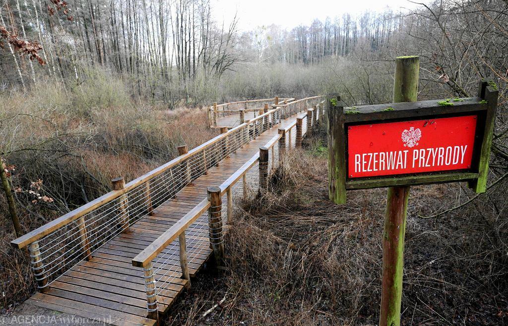 Nowy pomost w Lesie Bemowskim poprowadzono przez rezerwat Łosiowe Błota