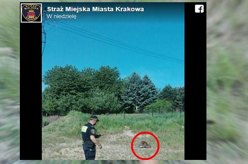 Strażnicy miejscy z Krakowa odebrali nietypowe zgłoszenie