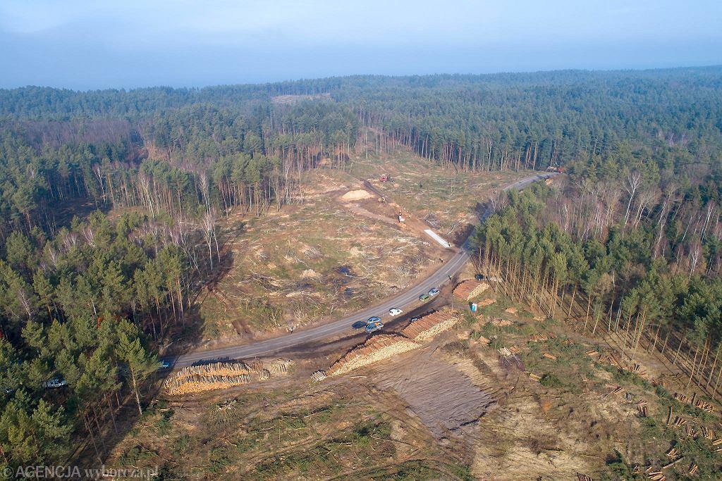 Wycinka lasu pod przekop Mierzei Wiślanej.