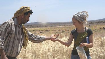 Dr Amaia Arranz-Otaegui zbiera ziarna zbóż rosnących z rejonie stanowiska Shubayqa