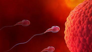 Jajeczkowanie to moment w cyklu owulacyjnym, który stwarza szanse na zapłodnienie.