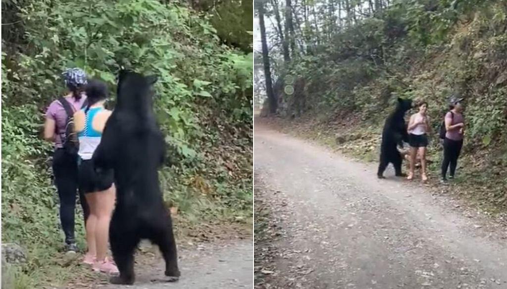 Spotkanie turystek z niedźwiedziem