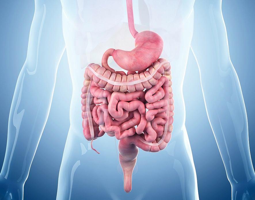 Sekretyna to jeden z hormonów żołądkowo-jelitowych