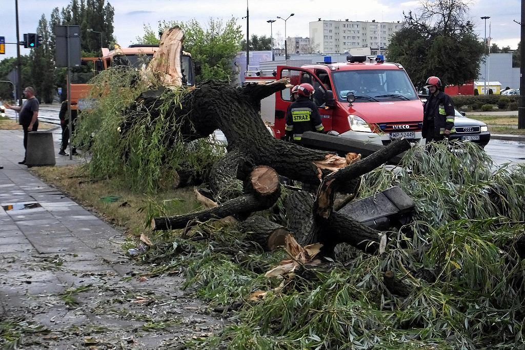 Powalone drzewo przy ul. Tysiąclecia