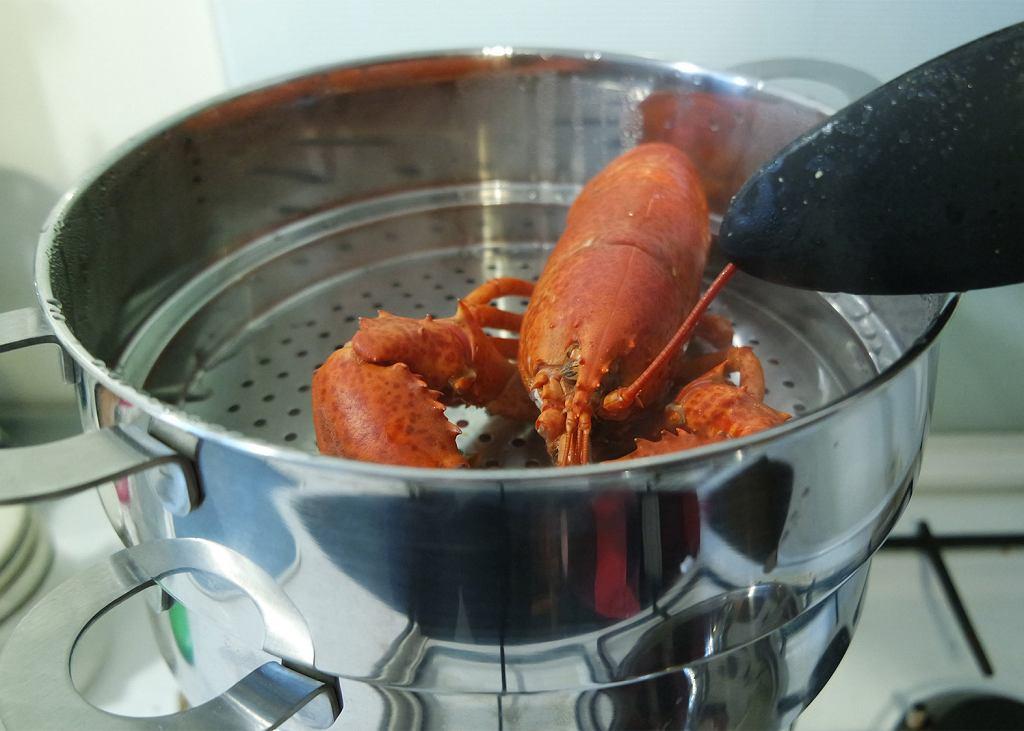 Gotowanie homara na parze