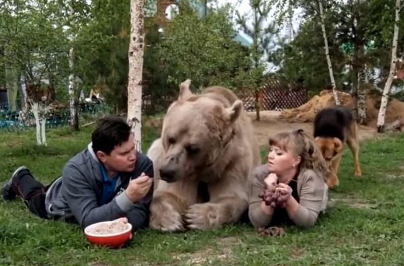 Niedźwiedź Stefan