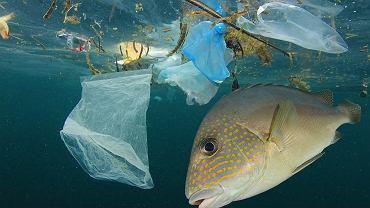 Żabka rezygnuje z plastikowych toreb. Zredukuje zużycie plastiku o 1000 ton rocznie