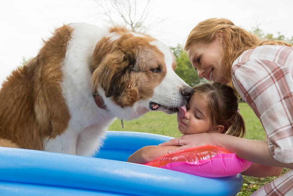 'Był sobie pies 2' - premiera, która wzruszy i małych, i dużych